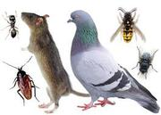 SUPER PEST & ANIMAL CONTROL GUARANTEED WITH WARRANTY