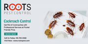 Cockroach Control Services in Canada | Roots Pest Control