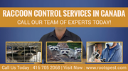 Roots Pest Control | Raccoon Control Services in Canada