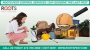 Roots Pest Control Services in Brampton,  Canada