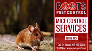 Mice Control Services in Brampton | Roots Pest Control