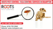 Flea Control Services in Brampton | Roots Pest Control