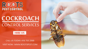 Cockroach Control Services in Brampton | Roots Pest Control