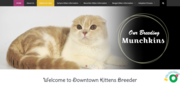 down town kittens