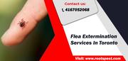 Best Flea Extermination In Toronto | Root Pest Control