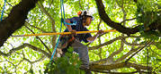 Getting Tree Trimming Services in Toronto